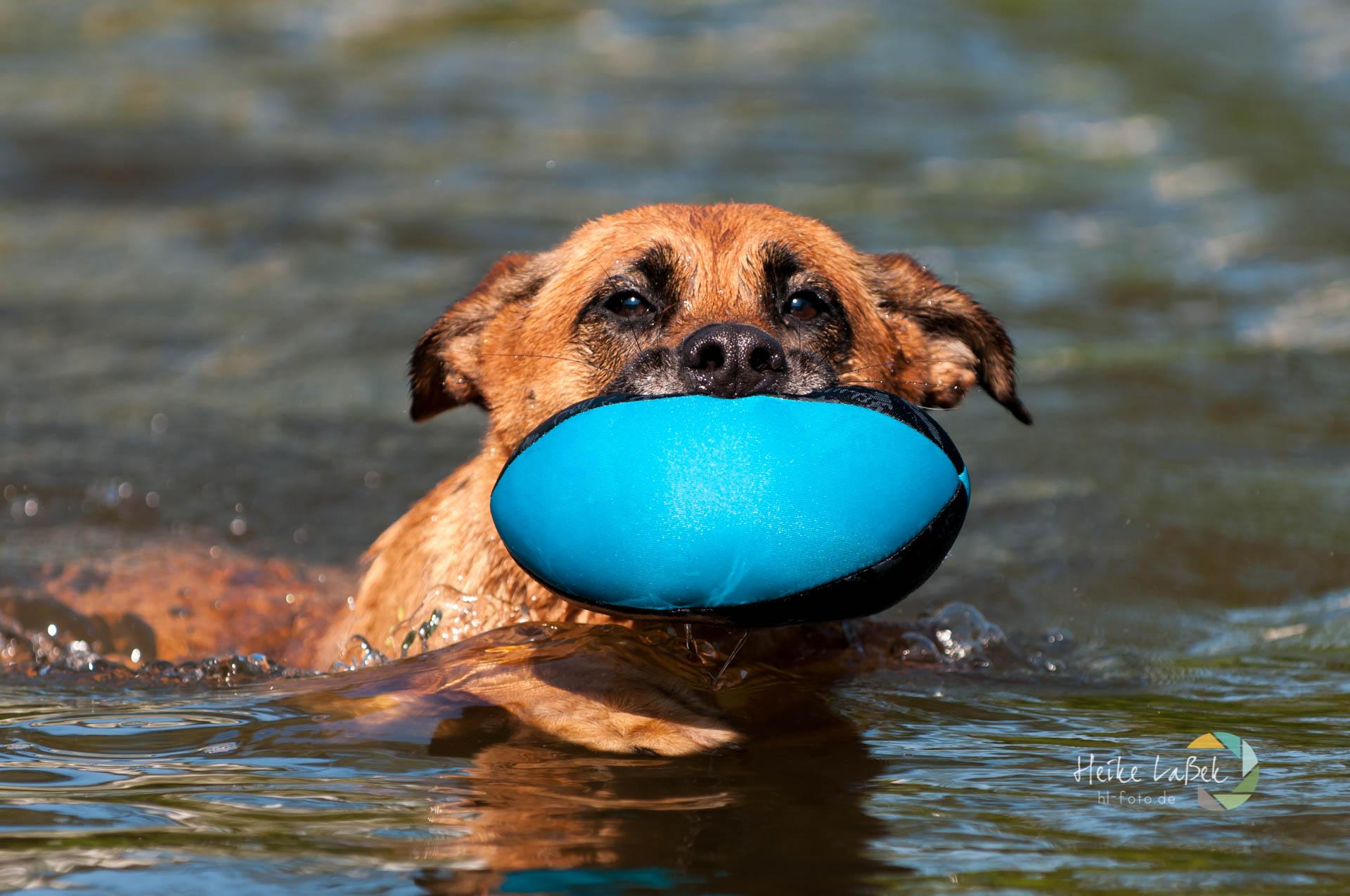 Mischling Kimi schwimmt