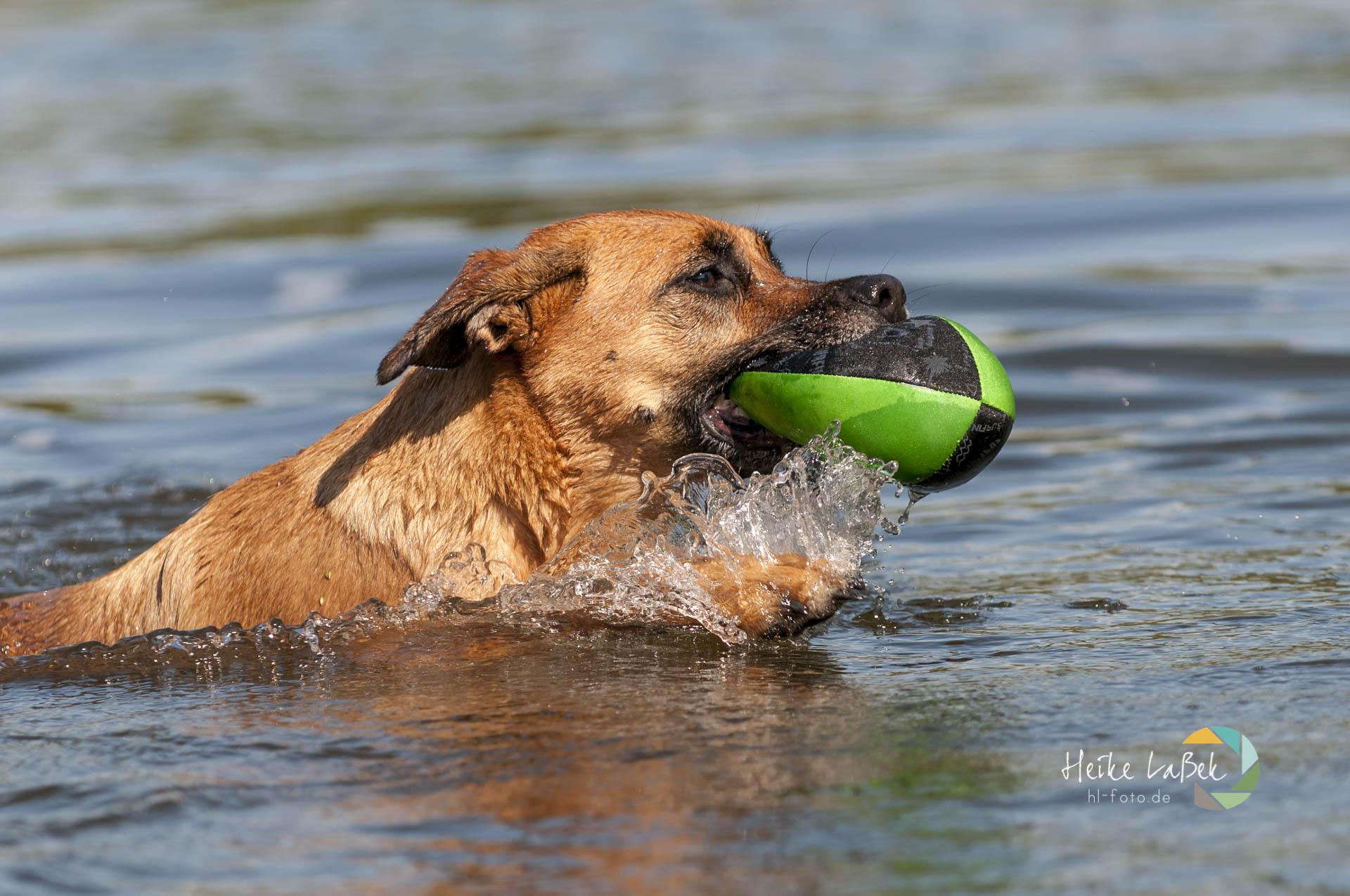 Mischling Kimi im Wasser