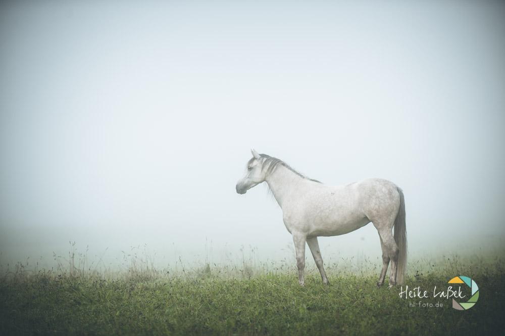 Andalusier im-nebel_heike-lassek-16