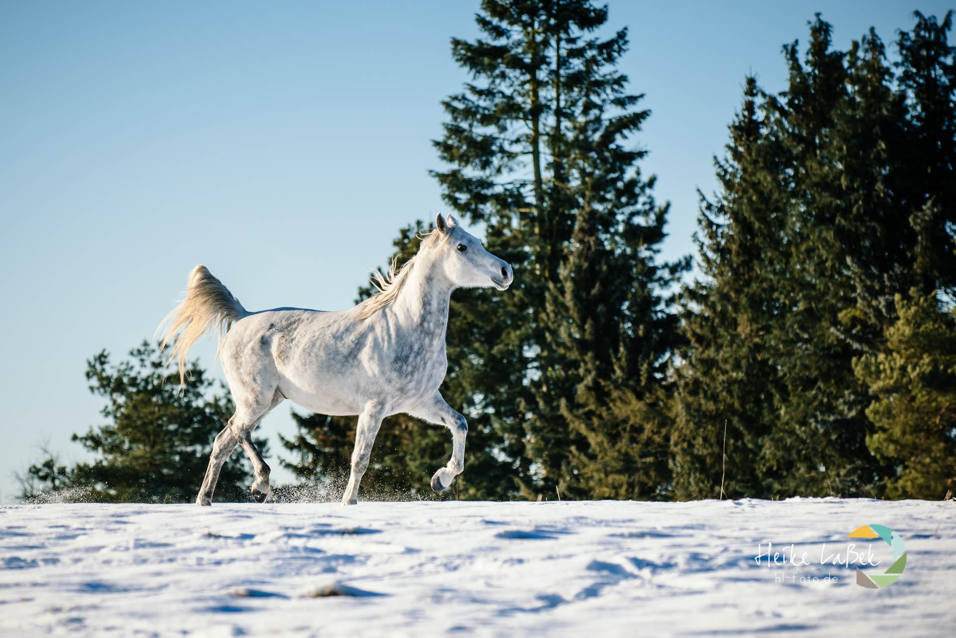 Winter auf Hof Etzenbach